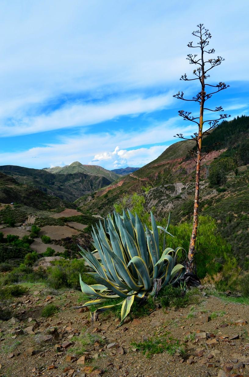 Bolivia_768